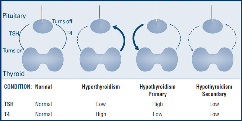 Thyroid Function Tests American Thyroid Association